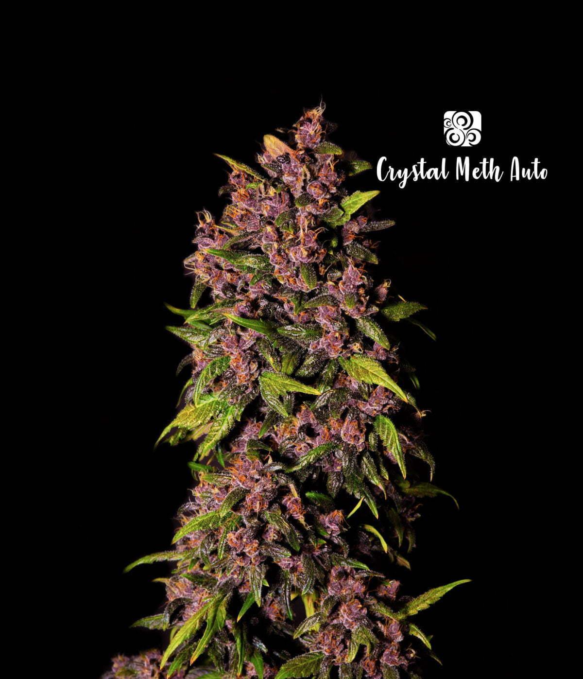 Crystal Meth Auto 1 1