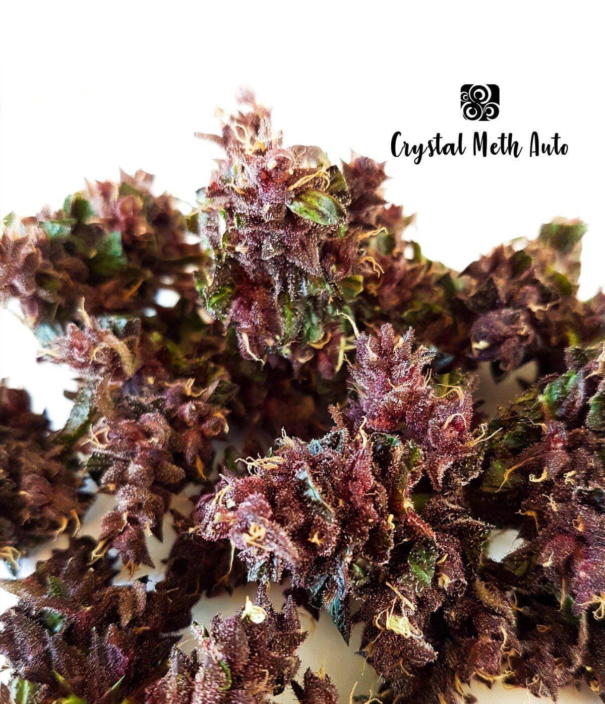 Crystal Meth Auto 3 1