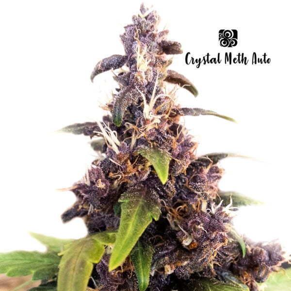 Crystal Meth Auto 4 1