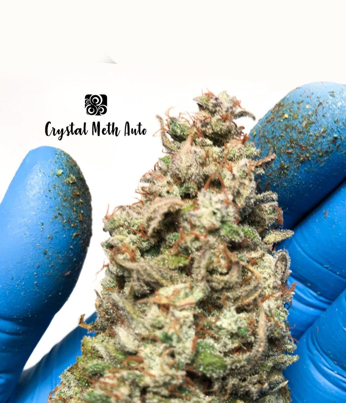 Crystal Meth Auto 5 1