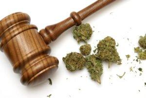 юридична відмова від насіння