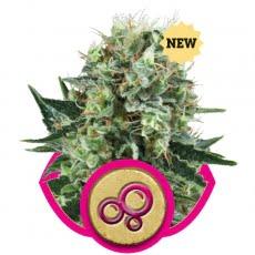 Феминизированные семена Bubble Kush-RQS-BUKU-Fem-10